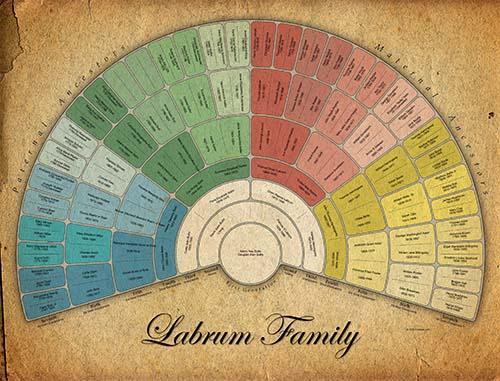 Color Fan Pedigree 7 gen