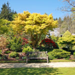 The Arborist Short Course: Advanced Tree Knowledge for Better Tree Care