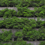 Vegetated Green Infrastructure: Plant and Soil Media Design Considerations for Improved Compliance (or Outcomes)