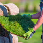Turf Grass and Sustainable Alternative Ground Covers for the Northeast