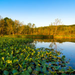 Ohio Wetlands Law and Compliance