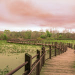 Michigan Wetlands Law and Compliance