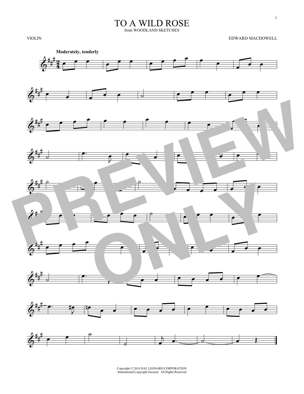 To A Wild Rose, Op. 51, No. 1 (Violin Solo)