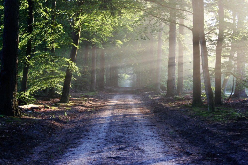Hallow App Blog Spotlight: A Spiritual Journey on the Camino