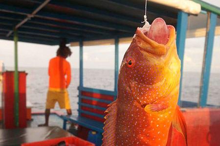 【馬爾地夫夜釣體驗】 Maafushi居民島