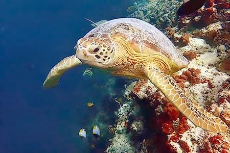 【仙本那-深潜乐】敦沙卡兰海洋公园