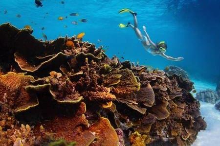 【澎湖忘憂島一日遊】藍色珊瑚礁秘境浮潛+水上活動