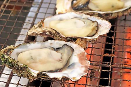 【澎湖海洋牧場體驗】誘釣花枝與海鱺魚+鮮蚵無限碳烤