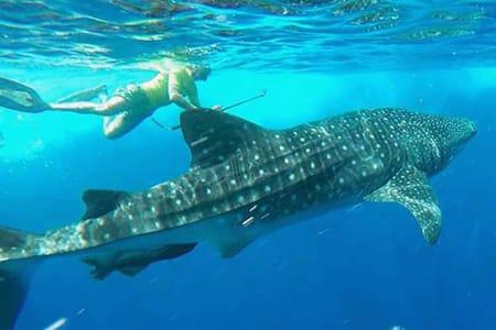 【馬爾地夫鯨鯊浮潛】Maafushi居民島