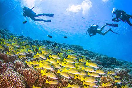 【馬爾地夫Maafushi深潛】 專業潛水(需有證照)