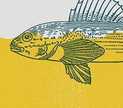 Darter Fish Yellow Drawing