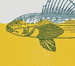 Darter Fish Yellow Drawing