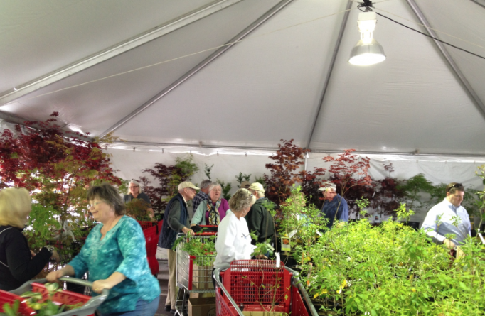 Plant Sale in Tent