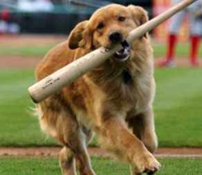 Dog Running with Baseball Bat for Bark at the Park