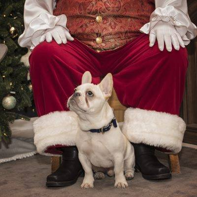 Santa Clause with Puppy Dog