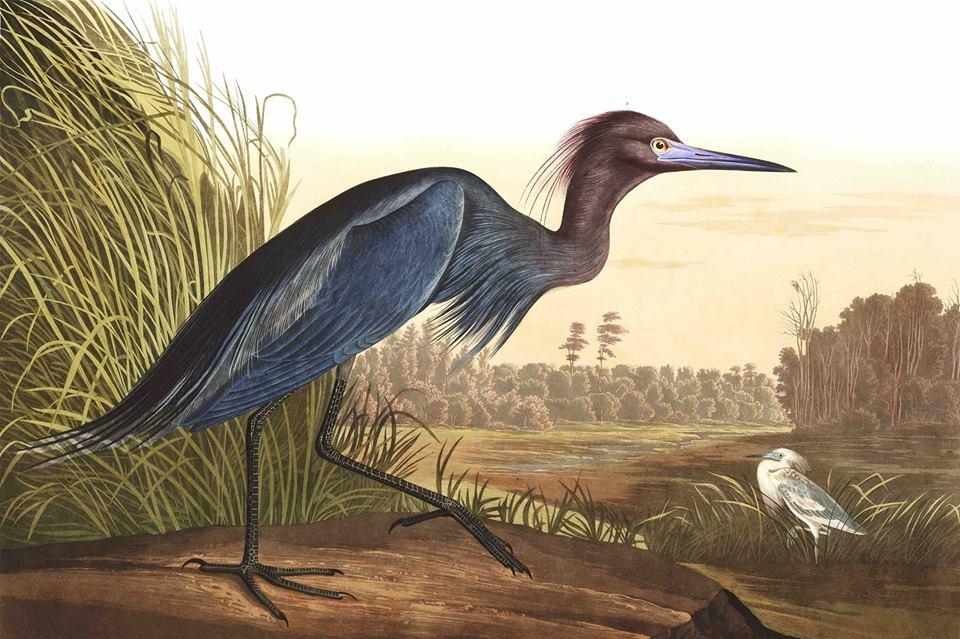 Alabama Wildlife Center Birds of Prey