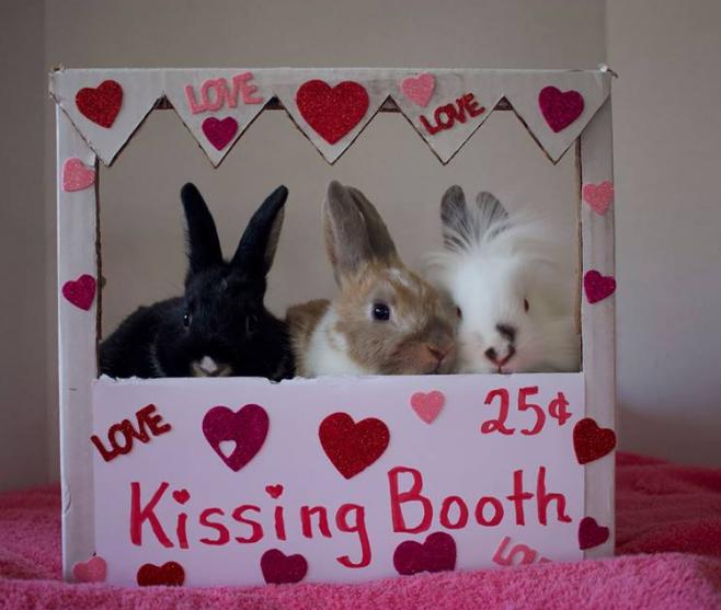 Bunny Meet & Greet