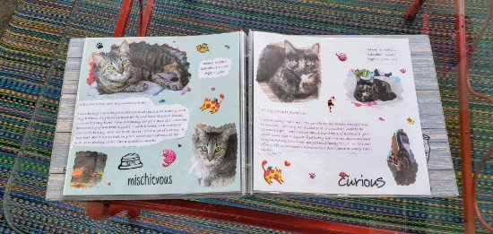 Gatos Cat Book