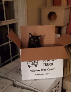 Our cat Guinness in a moving box