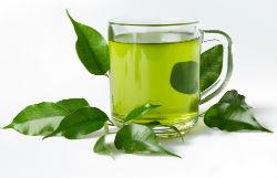 green tea 5:2 diet