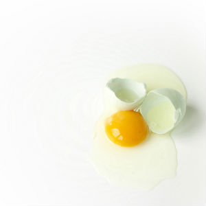 egg protein powder guide