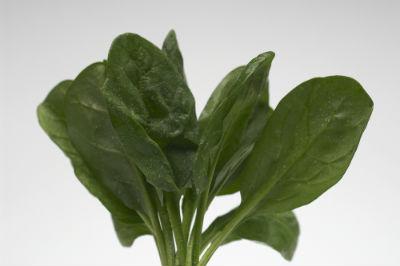 spinach source of magnesium