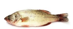 fish for magnesium