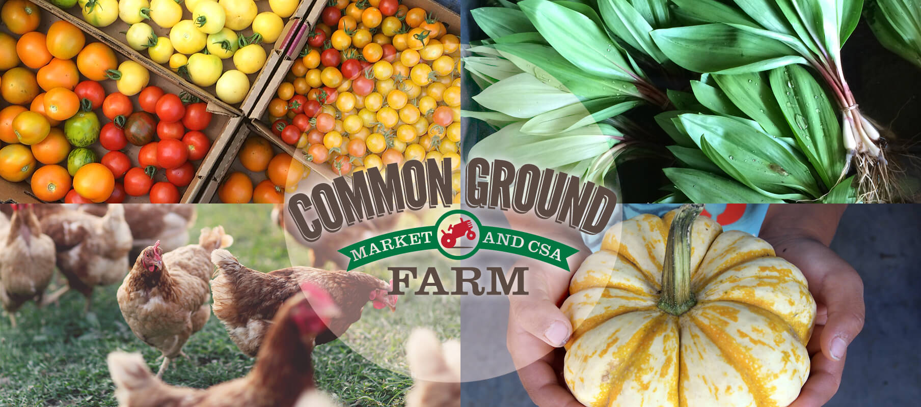 Farm Happenings at Common Ground Farm