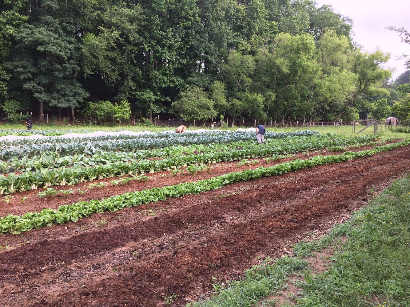 Cane Creek Farm