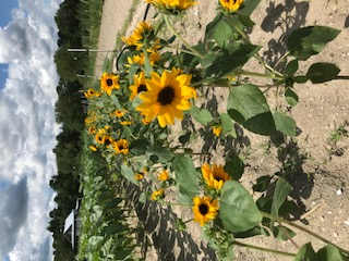 Farm Happenings for August 15-18, 2018