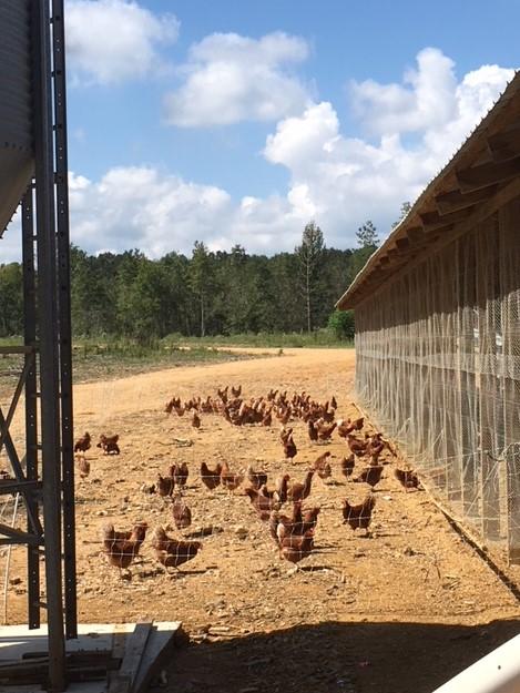 Farm Happenings for September 14, 2018