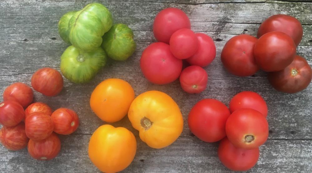 Tomato Season & Canning Time!