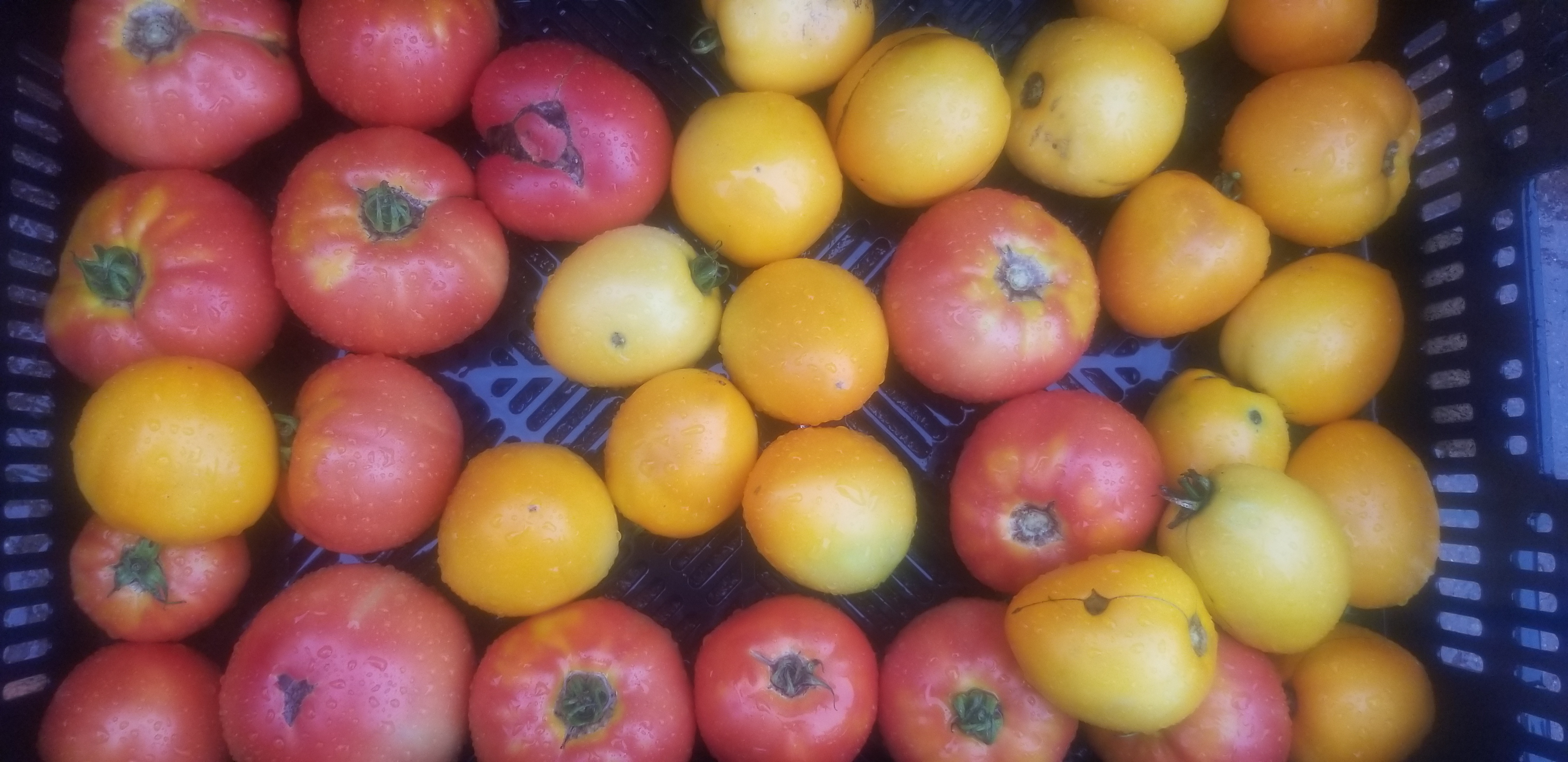 Farm Happenings for the Week of August 27, 2019