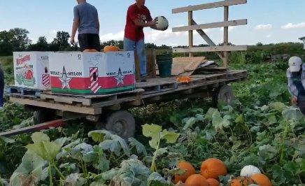 Harvie | CSA / farm shares from Riehm Produce Farm
