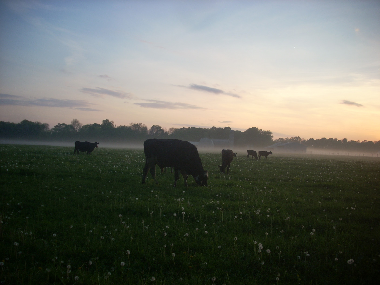 Farm Happenings for September 17, 2019