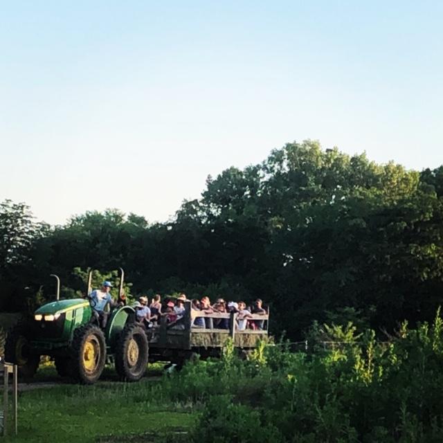 Farm Happenings for September 18, 19, and 21, 2019: LAST Summer CSA!