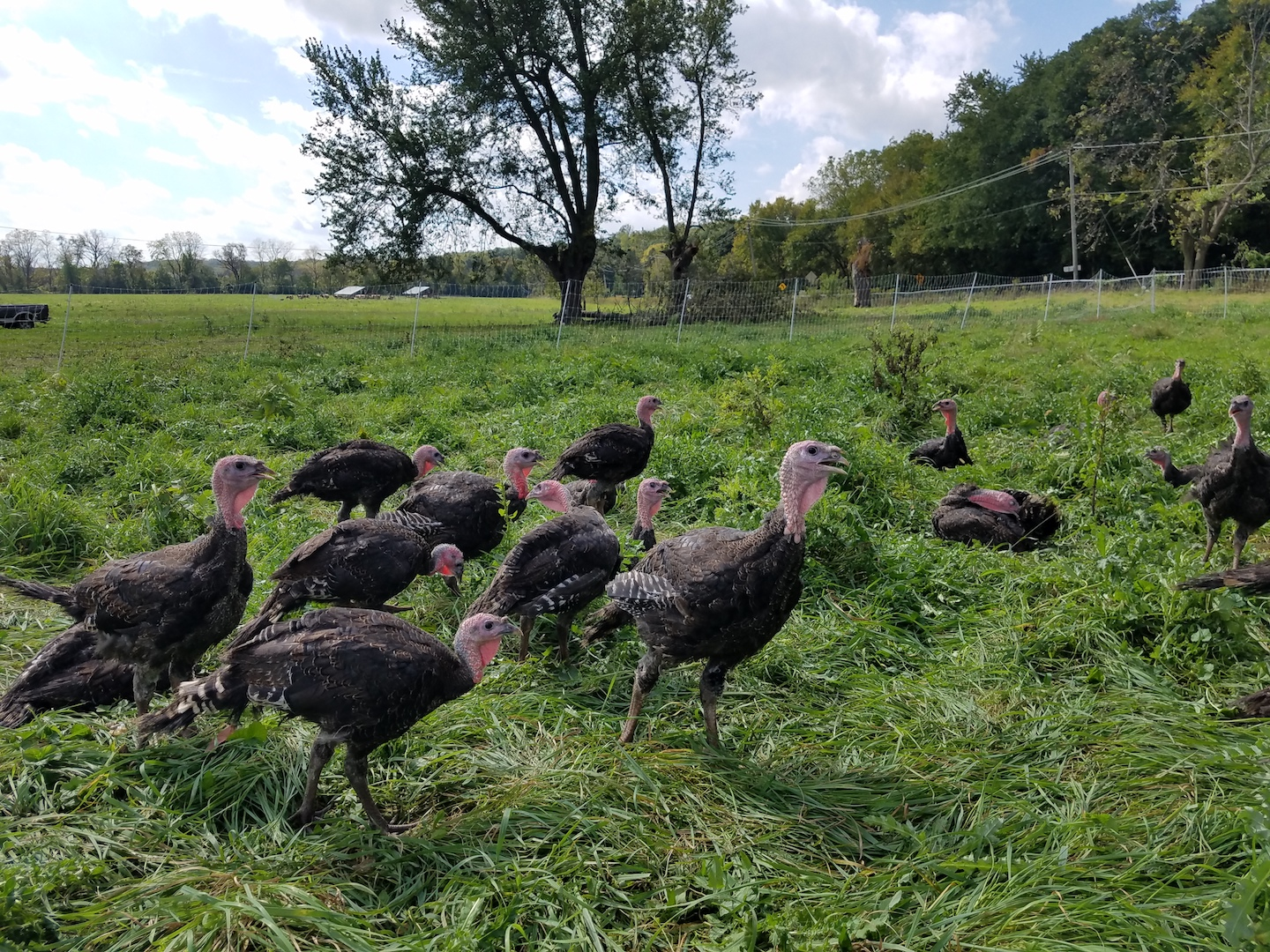 Farm Happenings for October 25, 2019