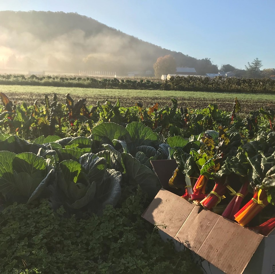 Farm Happenings for October 29, 2019: Please Read