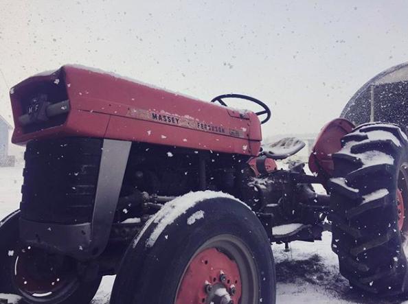 Winter/Spring 2019 Week 4 of 14; Vegetable Share- Coopers CSA Farm Happenings