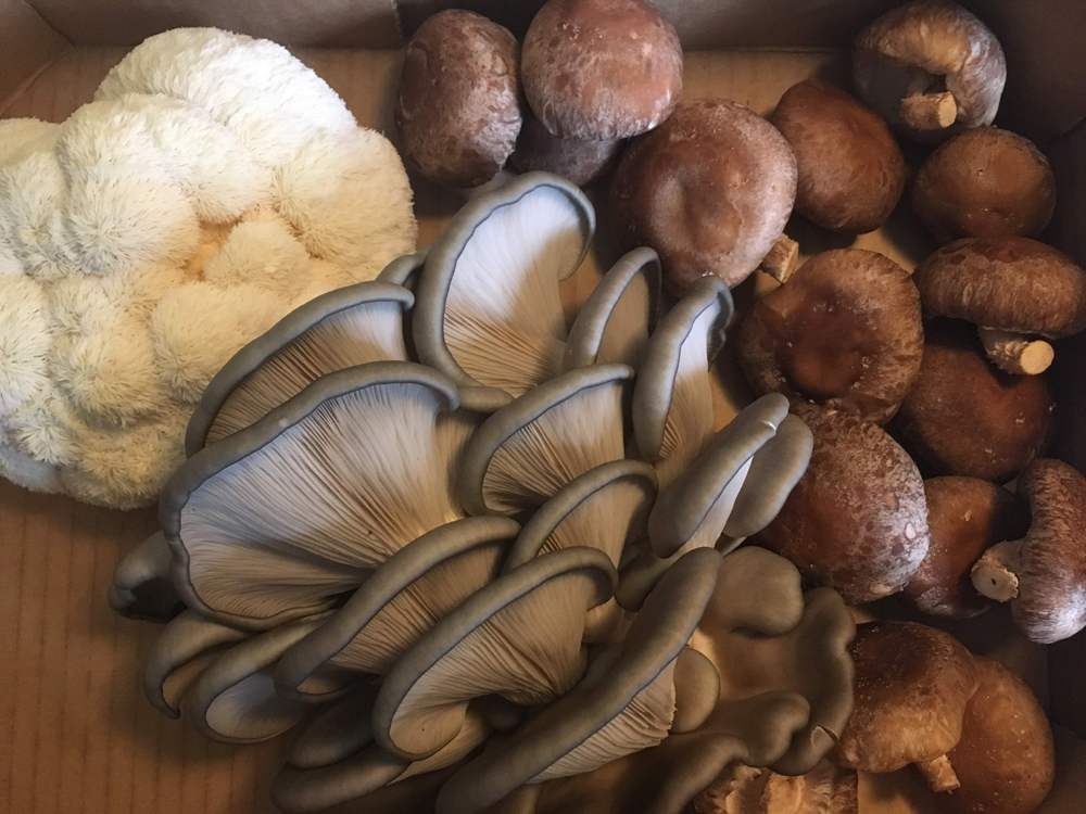 Farm Happenings for Jan. 7, 2020 - Winter Bounty Shares, NEW Mushroom Share & Introducing Moorit Hill Farm