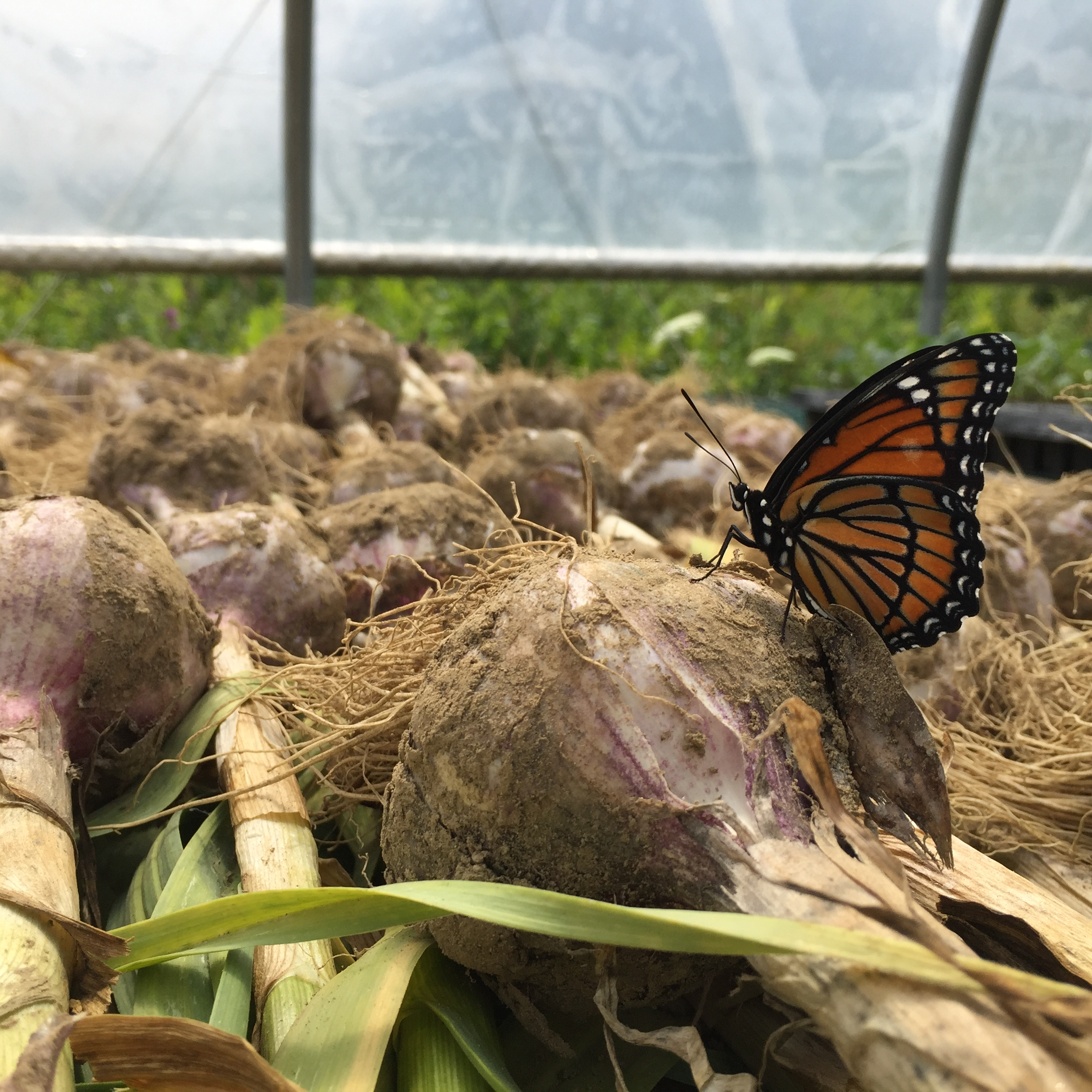 What's up on the Farm? January 21, 2020