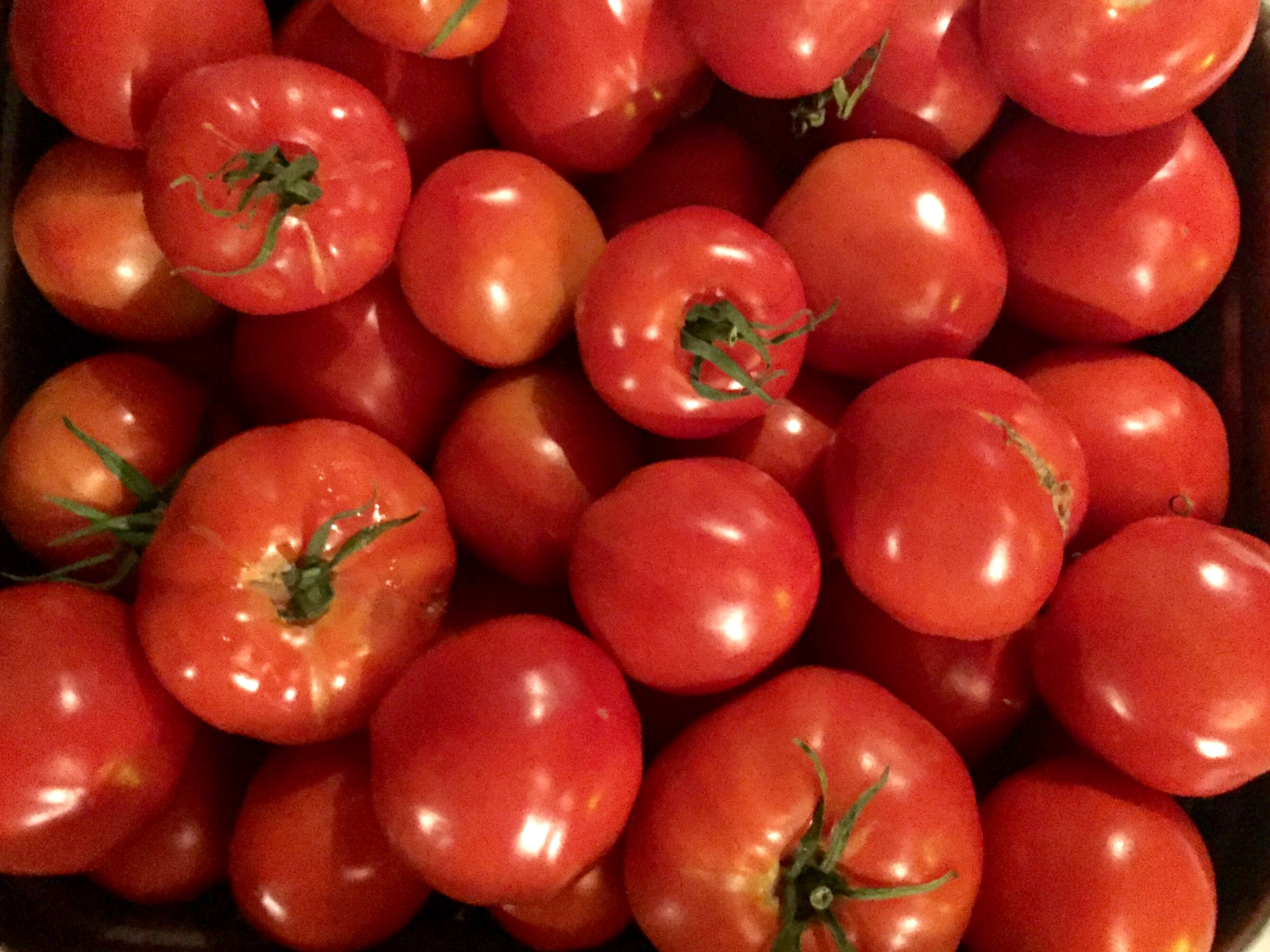 Tomatoes are back for January 25!
