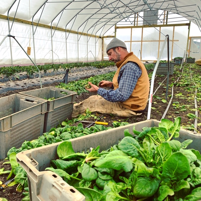 Jack on Our Winter Farm Share CSA Wrap Up