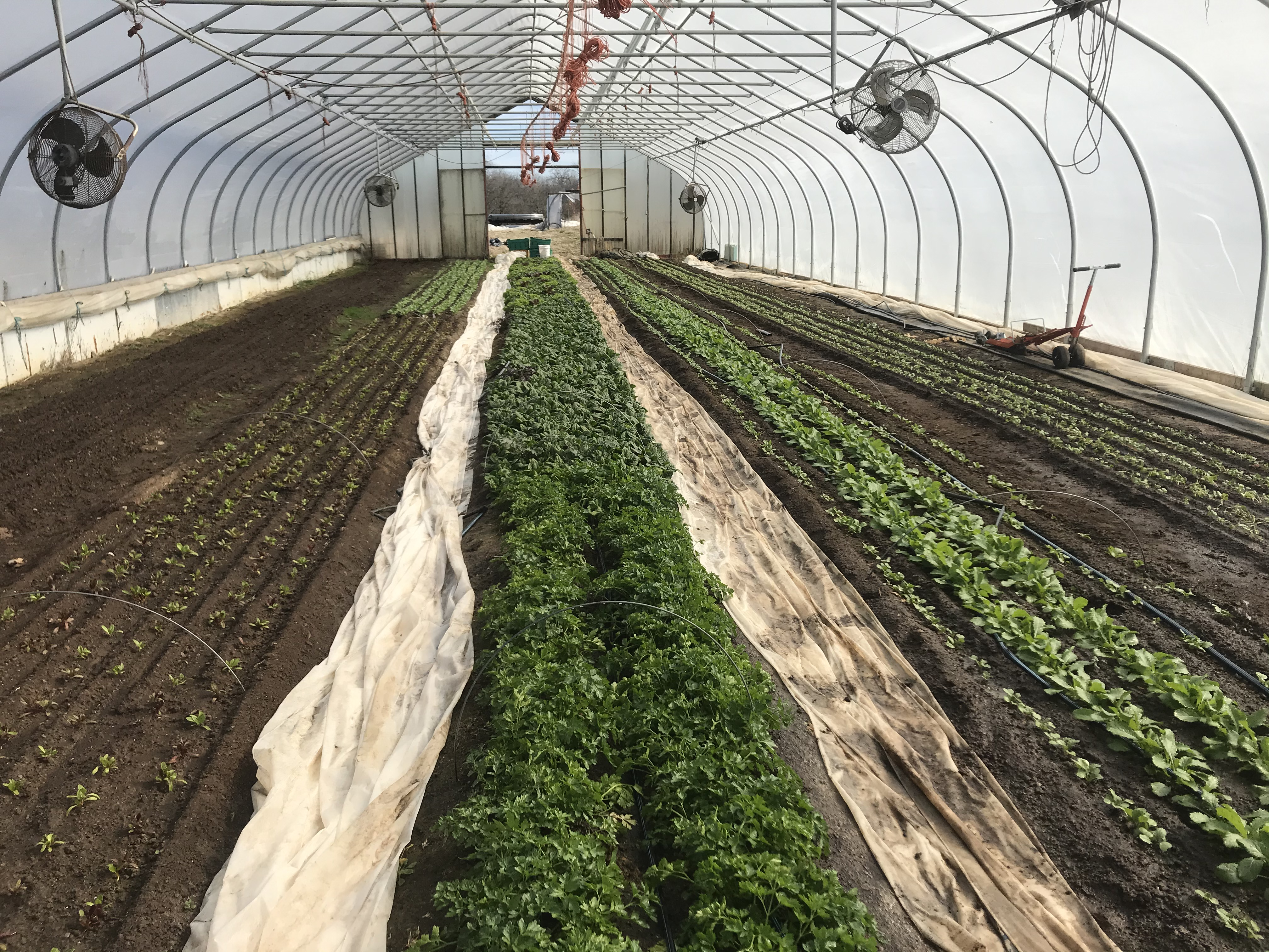 Farm Happenings for March 17, 2020