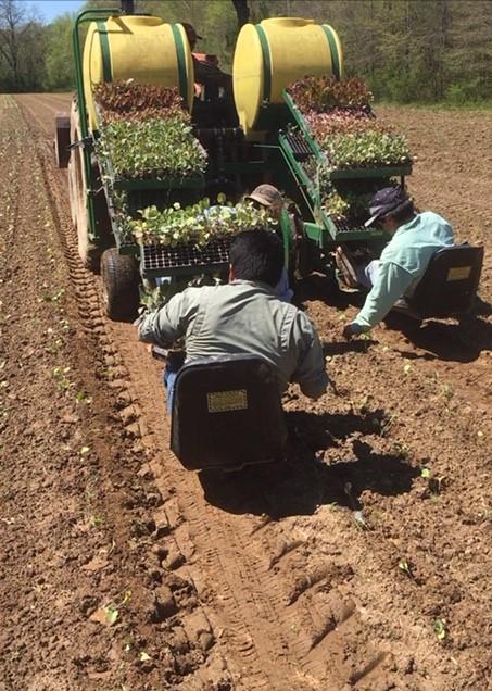 Farm Happenings for April 6, 2020
