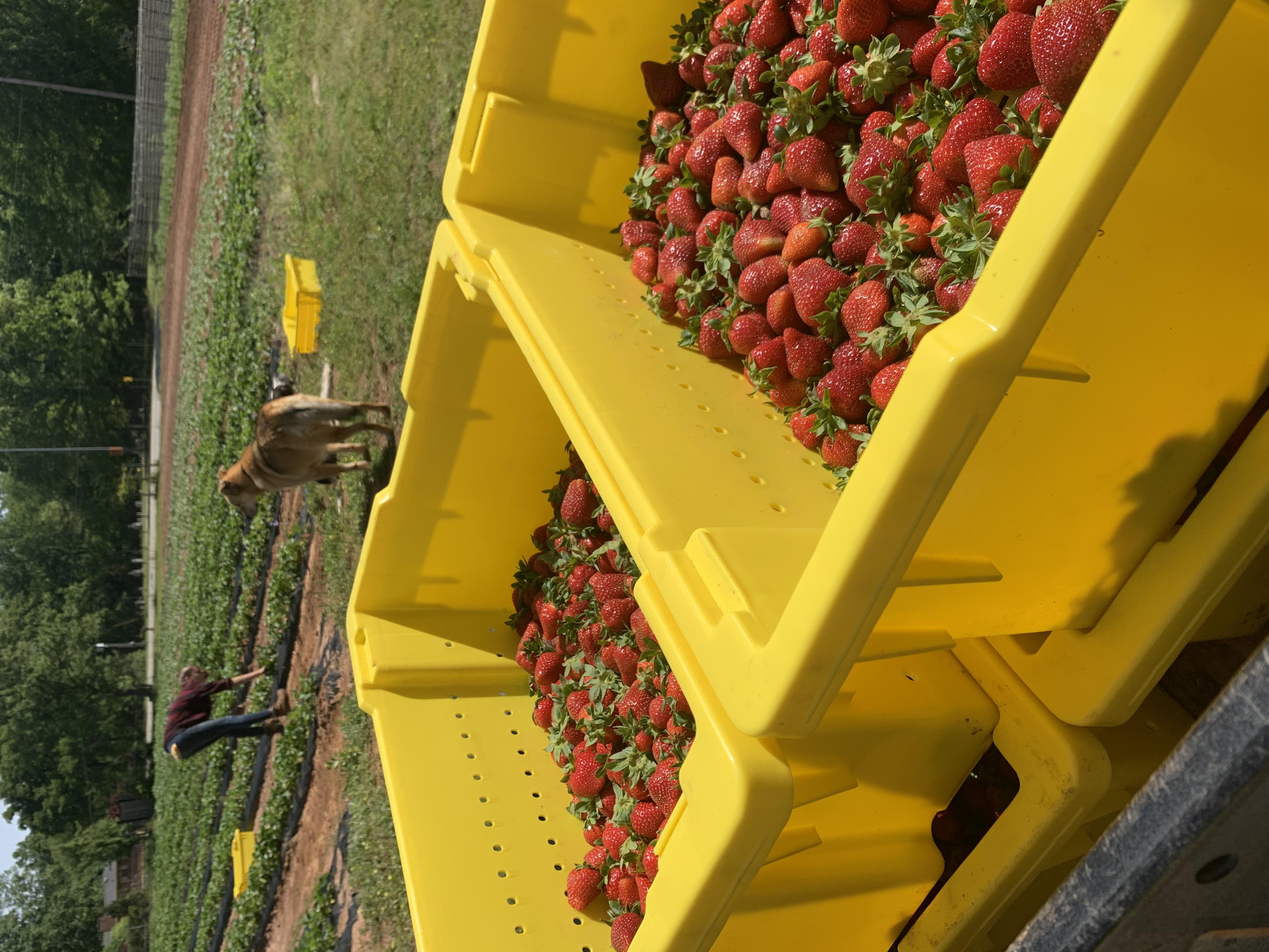 Farm Happenings for April 29, 2020