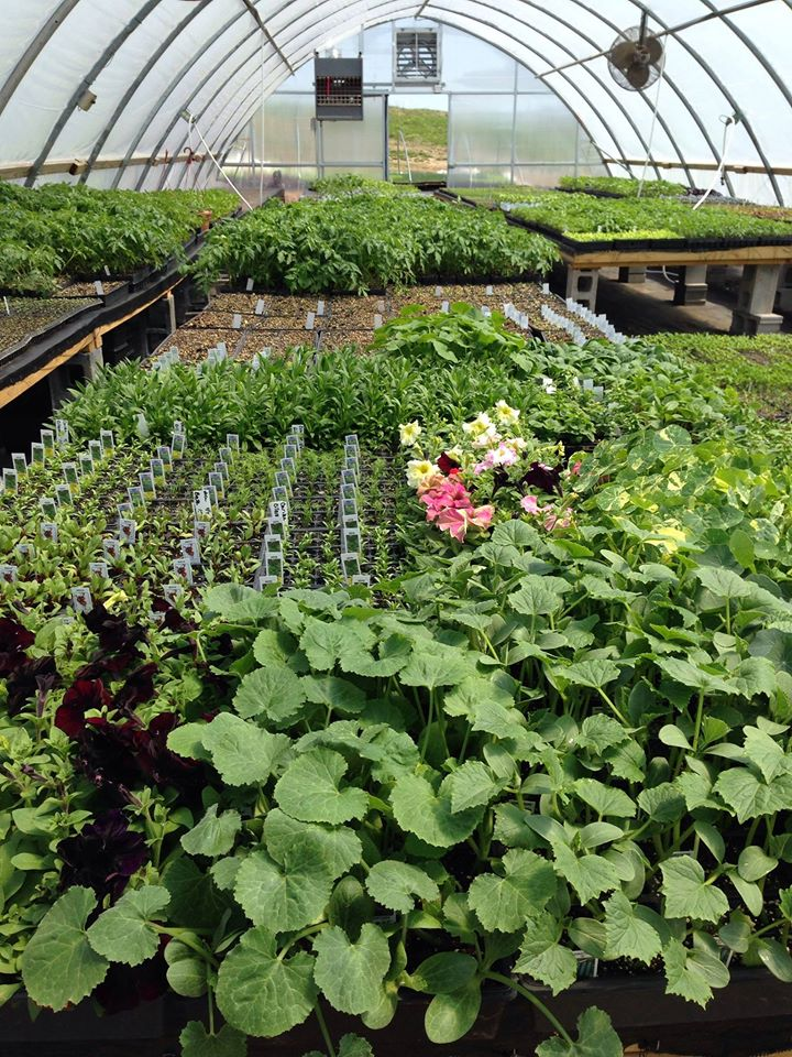 Annual Plant Sale Happening May 11, 2020