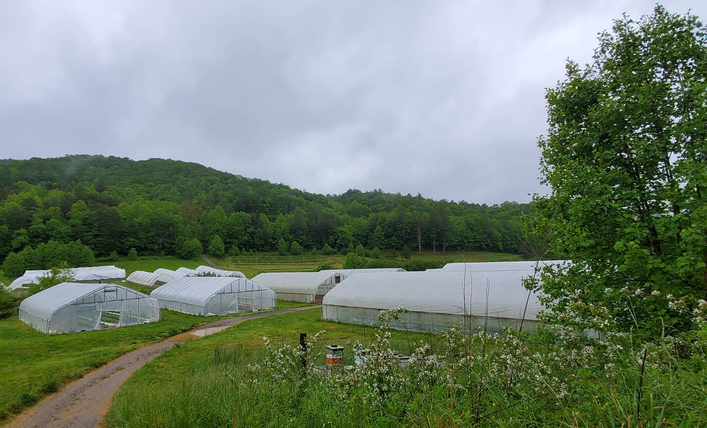 Farm Happenings for May 26, 2020: lackadaisical worry