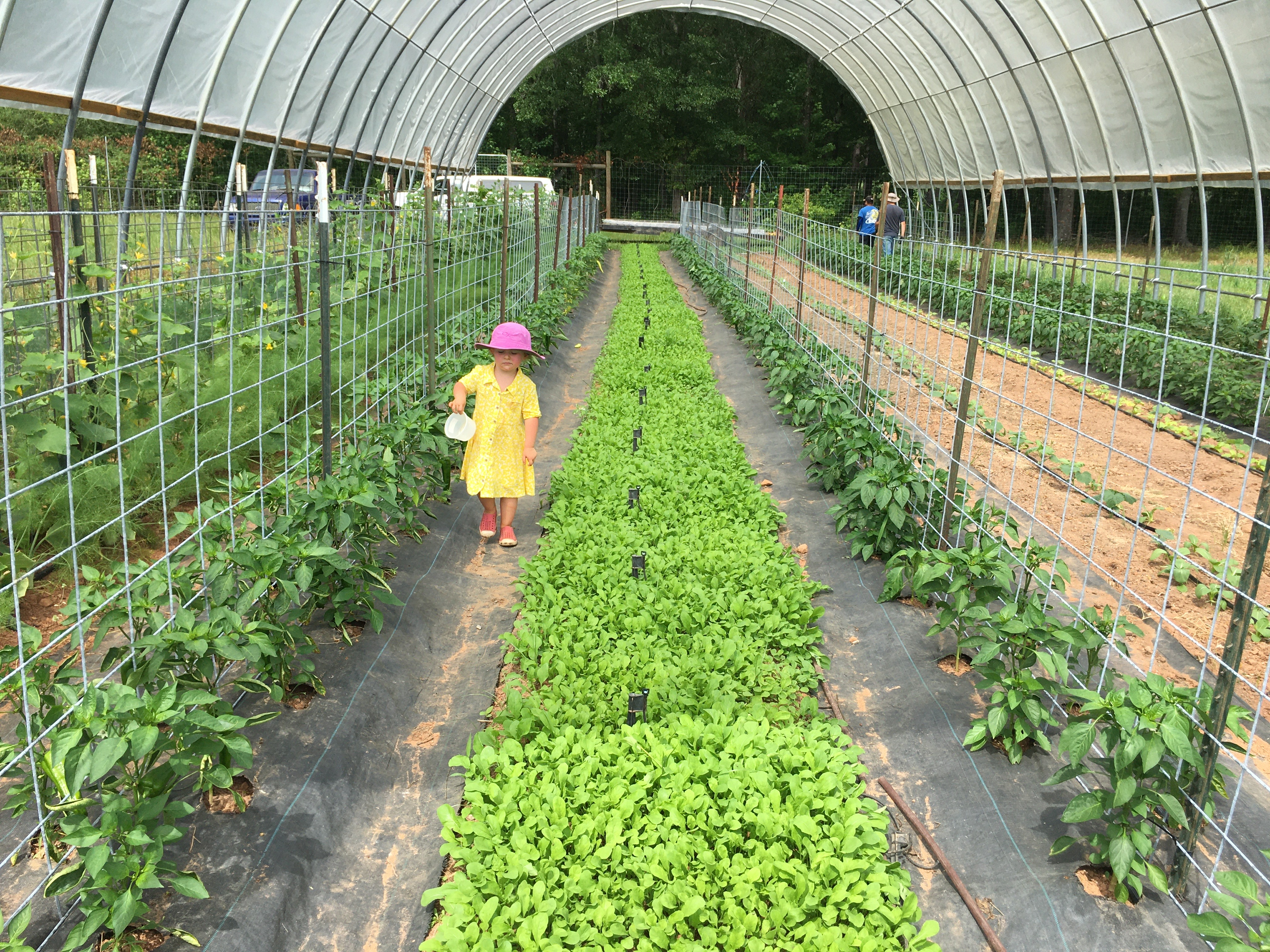 Farm Happenings for May 29th