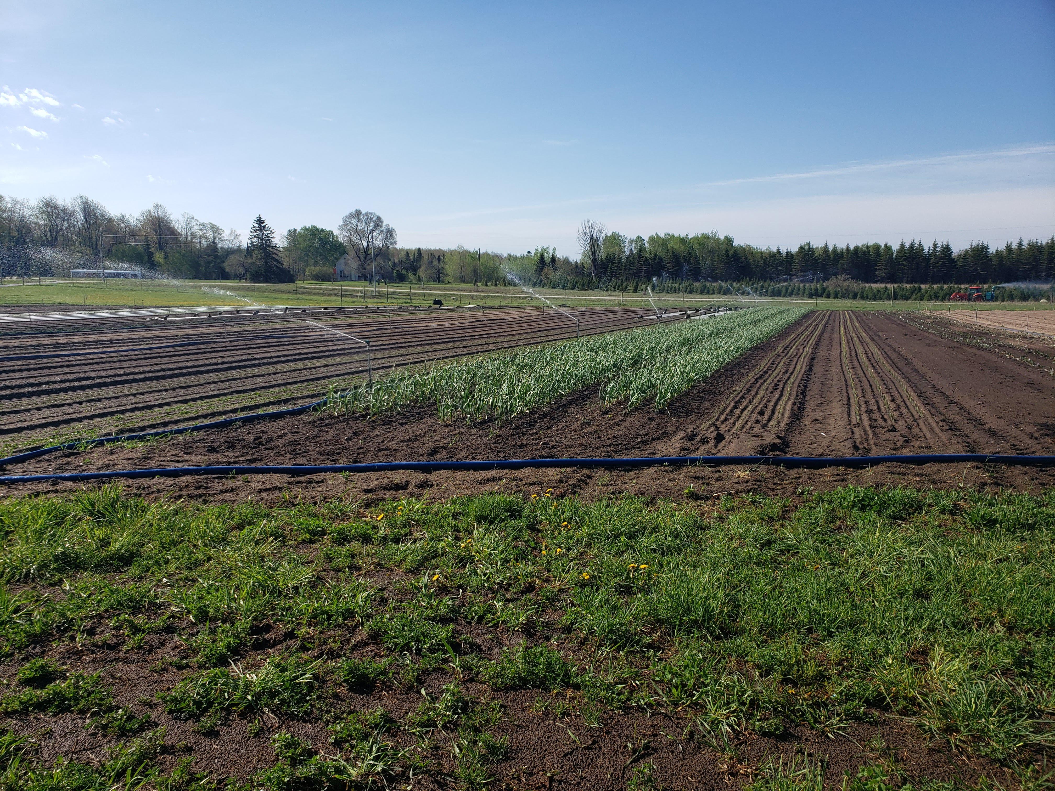 Farm Happenings for Week of June 1st